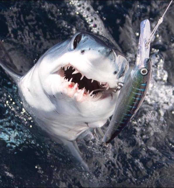 Shark fishing charter cape town