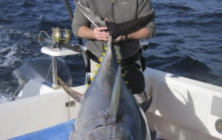 Cape Town Tuna Fishing Tournament 15
