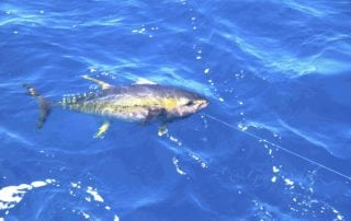 Cape Town Tuna Fishing Tournament 18