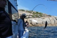 Reef Fishing Charters Cape Town 04