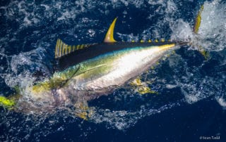 Deep Sea Fishing Charters Cape Town 28ft Sportfisher 0
