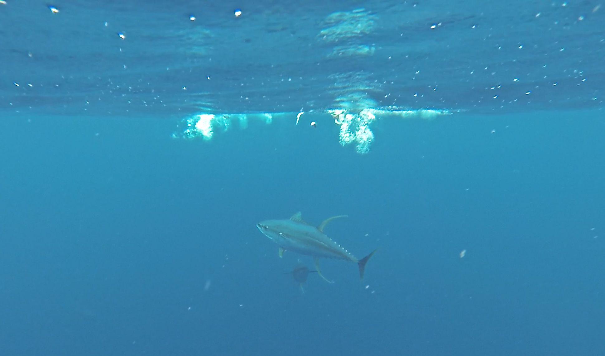 Deep Sea Fishing Charters Cape Town 28ft Sportfisher 0