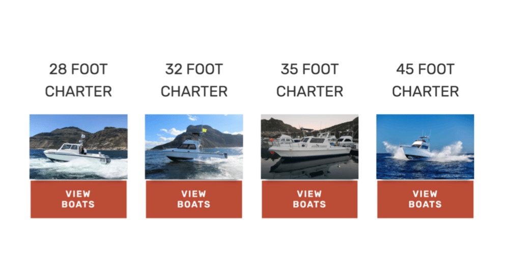 fishing charter boats hout bay cape town