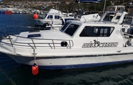 ocean warrior 35 foot cat fishing charter hout bay cape town 7