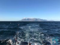 trolling fishing cape town deep sea fishing charters hout bay