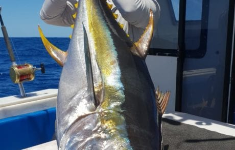 deep sea fishing cape town south africa -