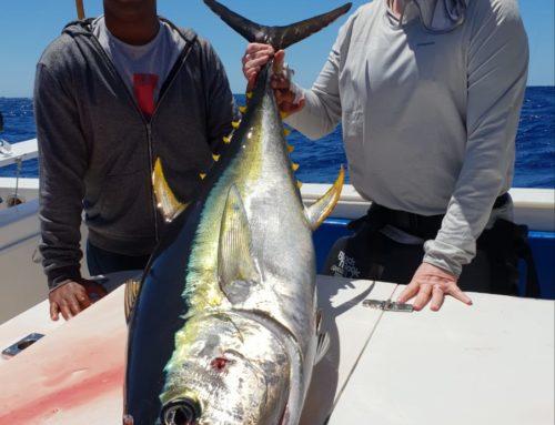 Clients enjoying fighting large Yellowfin Tuna last week.