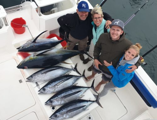 A Mixed catch of Yellowfin Tuna and Longfin Tuna