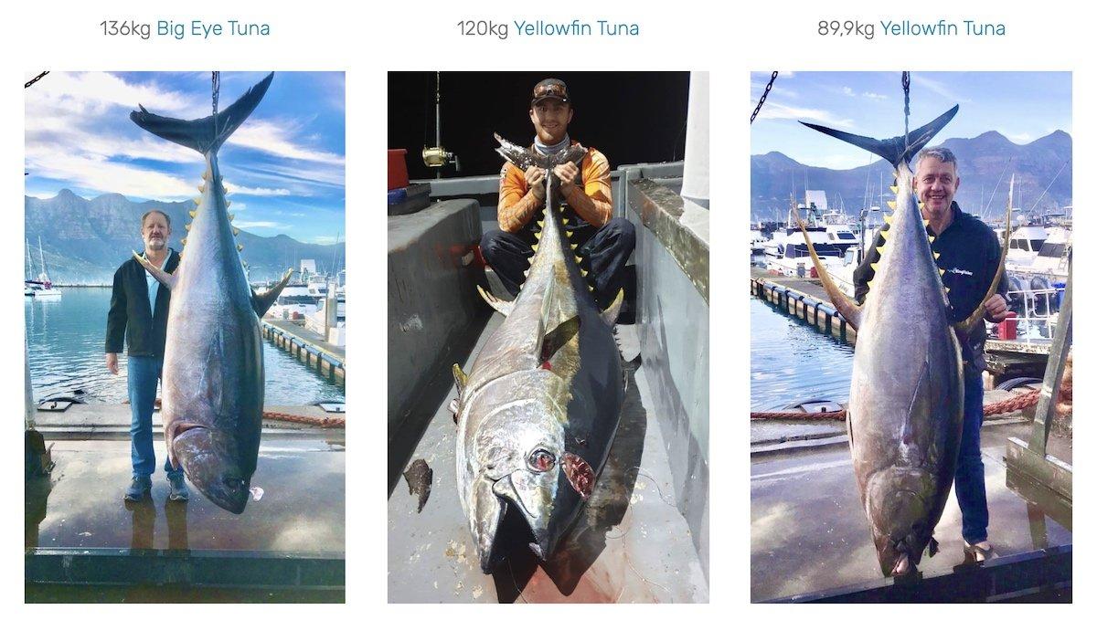 cape town fishing charters deep sea fishing hout bay