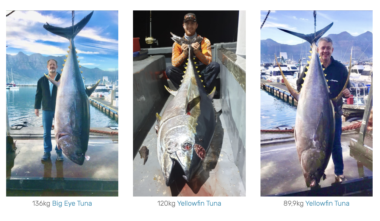 cape town tuna fishing charters cape town south africa yellowfin tuna fishing